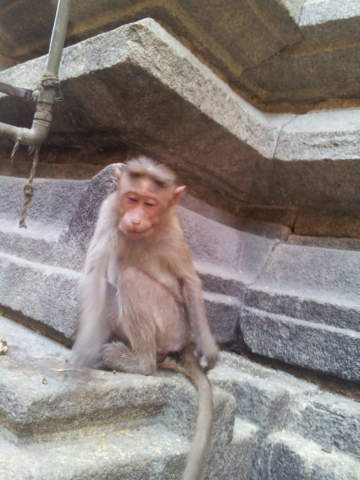 Monkey trouble inside the temple