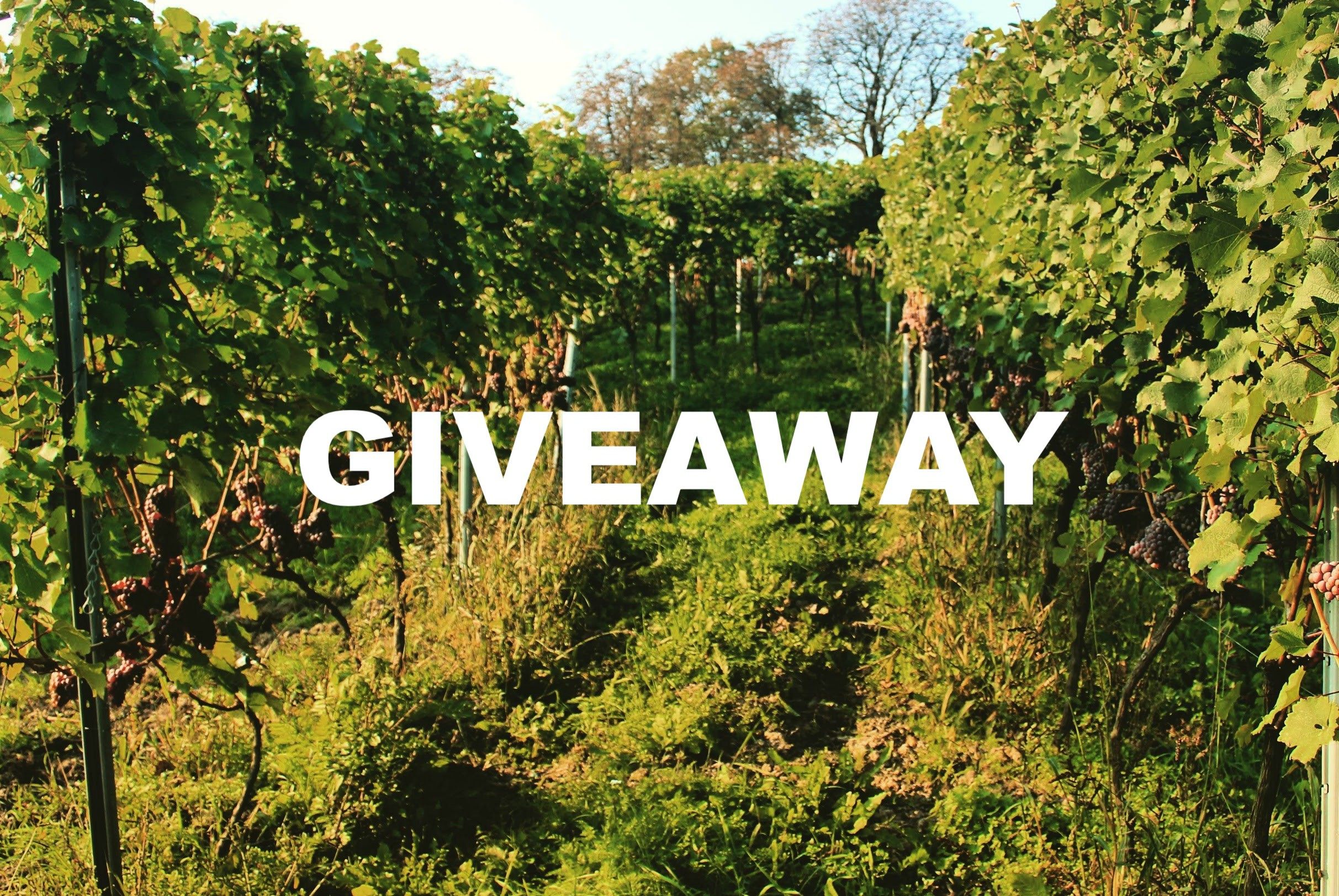 Win a bottle of Limited Edition Polish Wine (GiveAway) (CLOSED)